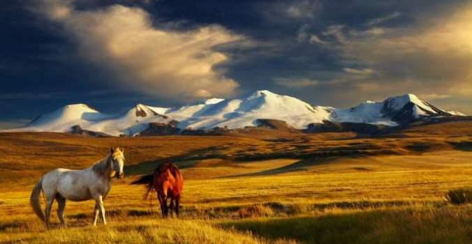 mongolie19bis